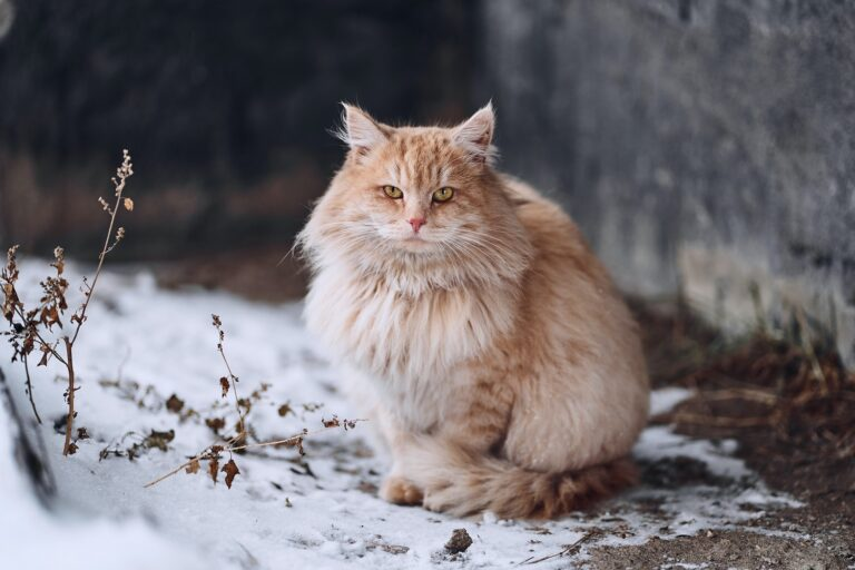 Cat Behavior Cats are known as solitary animals