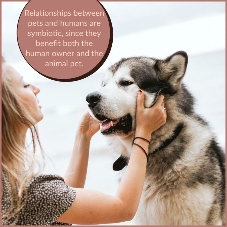 dog training - the best way to train dogs