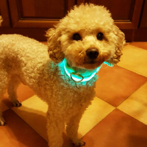 Premium Glow In The Dark LED Dog Safety Collar vc