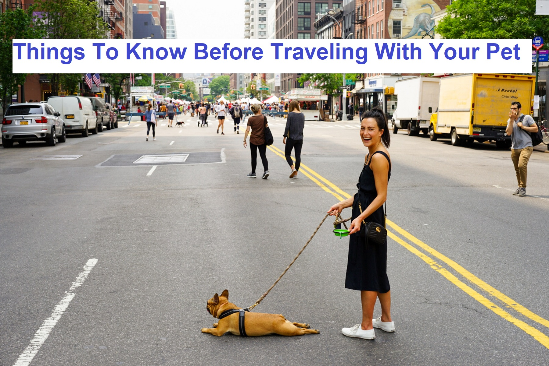 Things To Know Before Traveling With Your Pet