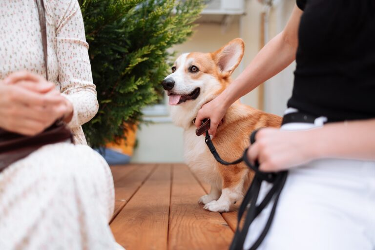 Pet Medications - Buy Online And Save